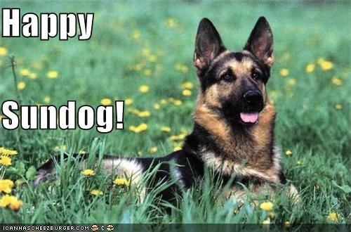 german shepherd grass happy dog happy sundog laying down outdoors smiling Sundog - 5024708096
