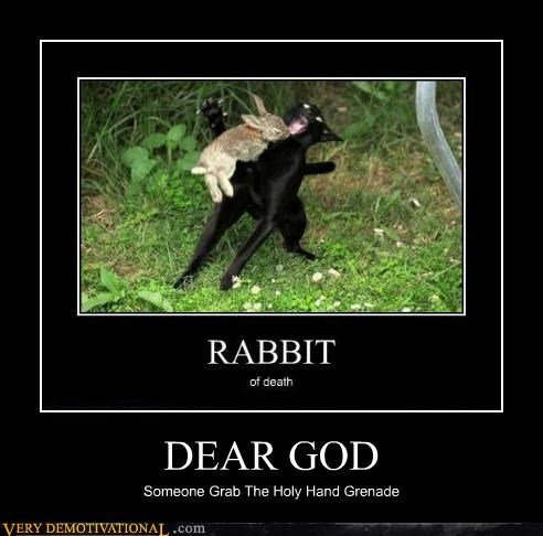 bunny,cat,hilarious,holy hand grenade
