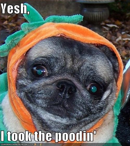 costume pudding pug pumpkins stole stolen thief - 5024942080