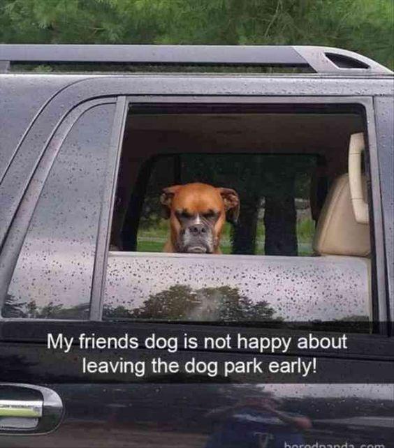 dogs park Memes - 5025029