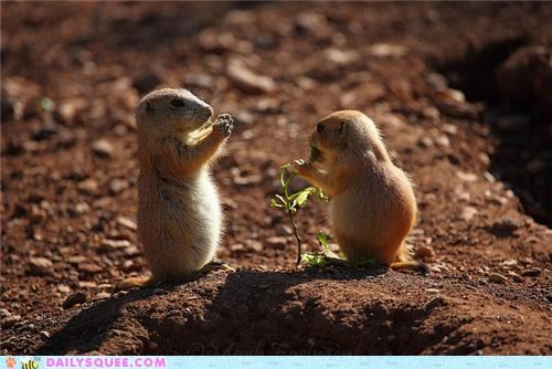 Babies,baby,contest,marmot,marmots,poll,prairie dog,Prairie Dogs,squee spree