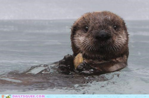 adorable baby cheating cuteness daww floating Hall of Fame innate otter pun squee - 5025344512