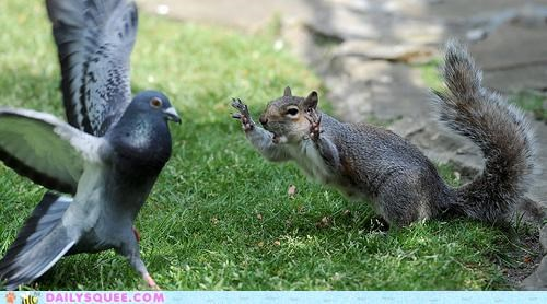 acting like animals doing it wrong FAIL failure Hall of Fame insult insulting monty python monty python and the holy grail pigeon squirrel - 5025355520