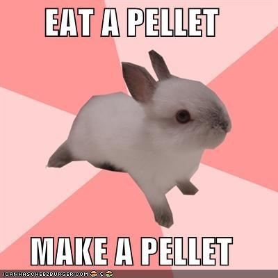 animemes circle of life food Memes pellet poop rabbit - 5025401600