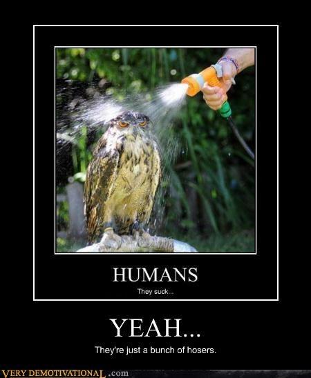 angry bird hilarious hose hosers Owl wtf - 5026043136