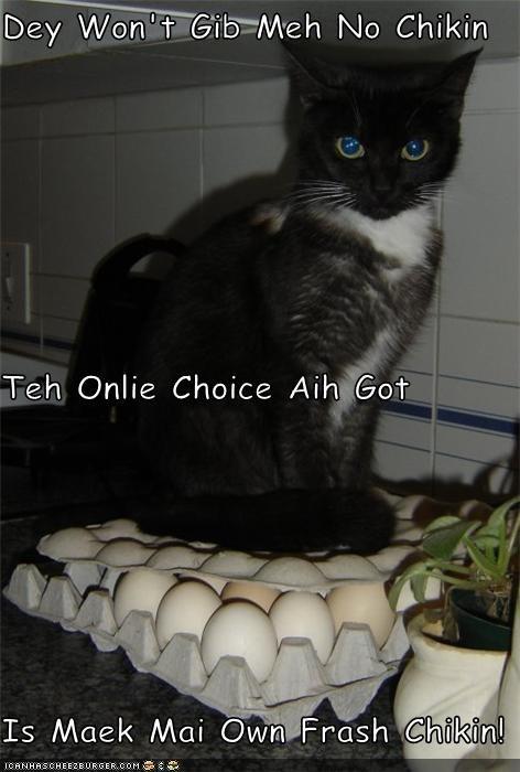 Cheezburger Image 5026208768