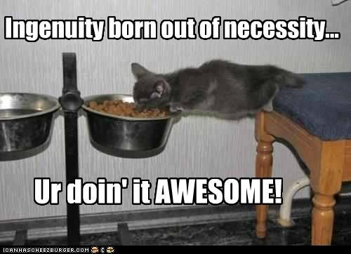 awesome,born,caption,captioned,cat,do want,doing it right,ingenuity,kitten,necessity,noms,reaching,success,win