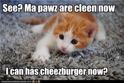 Cheezburger Image 5026860800