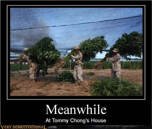 drugs hilarious Meanwhile tommy chong weed