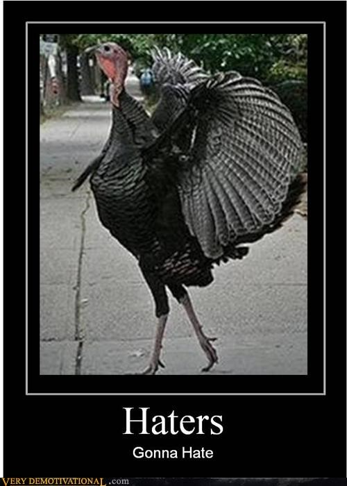 animals,haters,hilarious,Turkey