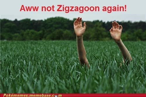 Battle,IRL,tall grass,wild,zigzagoon