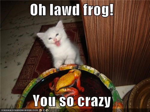 animals Cats crazy frogs I Can Has Cheezburger lol silly - 5027729920