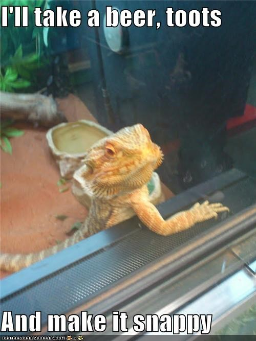 animals bar bearded dragon beer I Can Has Cheezburger lizards ordering rude toots - 5027759872