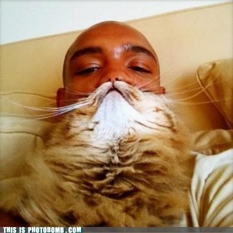 Animal Bomb cat chin facial hair mustache