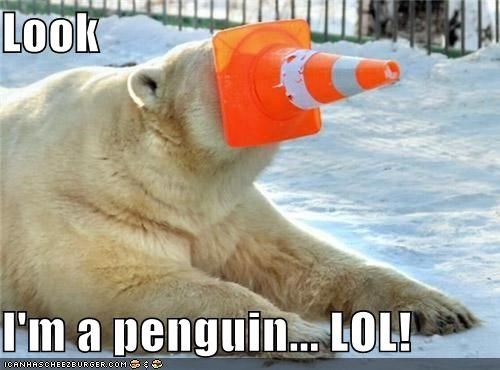animals,cones,costume,I Can Has Cheezburger,lol,orange cone,penguins,polar bears