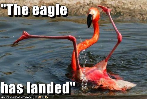 animals,derp,eagle,flamingos,I Can Has Cheezburger,phrases,the eagle has landed