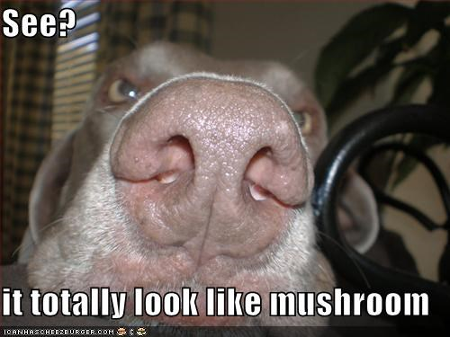 animals,dogs,i has a hotdog,Mushrooms,noses,shapes