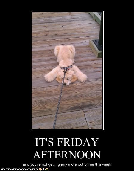 done dragging FRIDAY leash no no more not happening stubborn stuck work - 5028595712