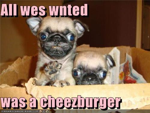 Cheezburger Image 5028941568