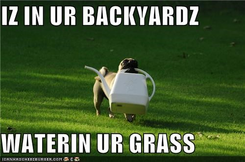 chores,grass,happy,happy dog,help,helping,outdoors,proud,pug,watering can,work,yard,yard work