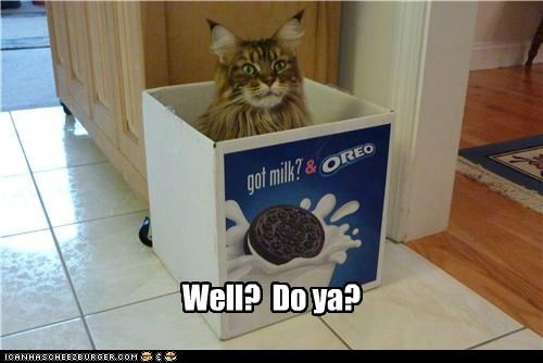 caption captioned cat confirm deny do want got milk oreo question slogan waiting well - 5029118976