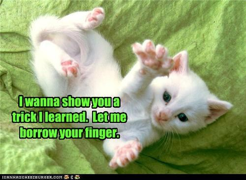 borrow,caption,captioned,cat,finger,kitten,learned,let,permission,request,show,trick,want