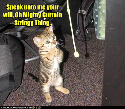 caption captioned cat curtain kitten listening praying speak string thing worshipping - 5029141248