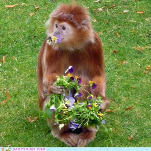 acting like animals asking bouquet dance date eating flowers hungry monkey nervous nomming noms oops - 5029292800