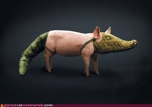 alligator costume pig wtf