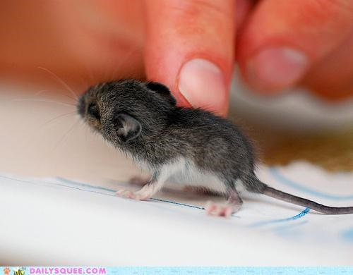 adorable finger Hall of Fame jerboa minuscule size tiny what-is-this-animal whatsit - 5029574144