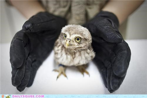 baby,do want,Hall of Fame,hands,holding,Owl,owlet,releasing,willpower