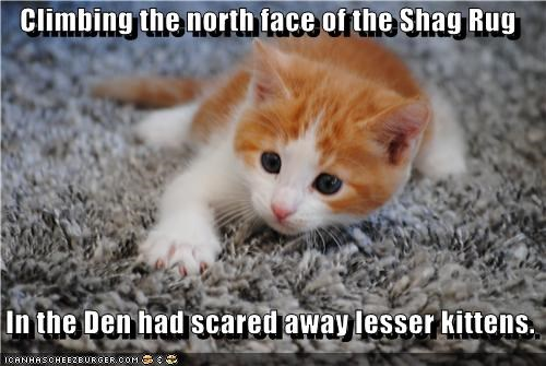 Climbing the north face of the Shag Rug In the Den had scared away lesser kittens.
