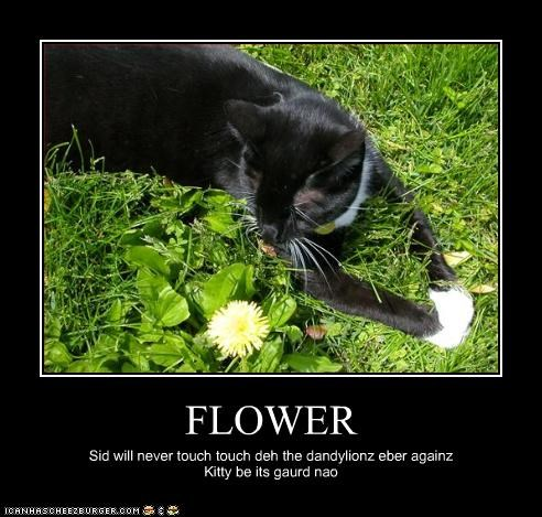 FLOWER Sid will never touch touch deh the dandylionz eber againz Kitty be its gaurd nao