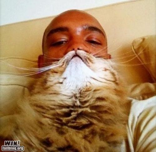 beard cat fashion pets - 5031052544