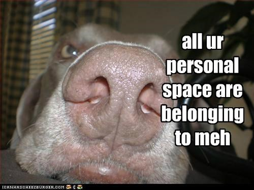 close up face in your face mine nose personal space whatbreed - 5031601152