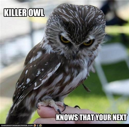 KILLER OWL KNOWS THAT YOUR NEXT