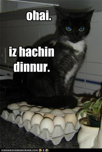 Cheezburger Image 5032232192