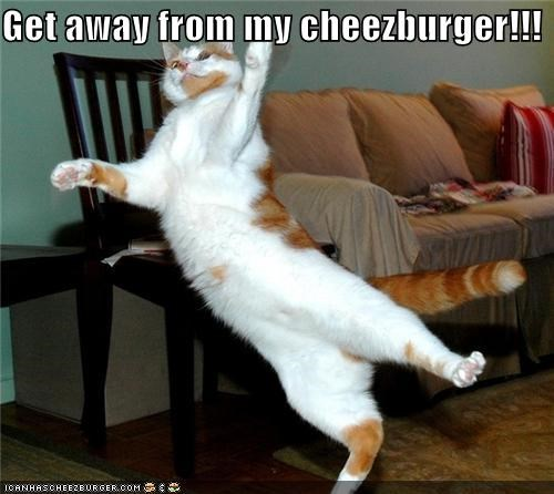Cheezburger Image 5032894464