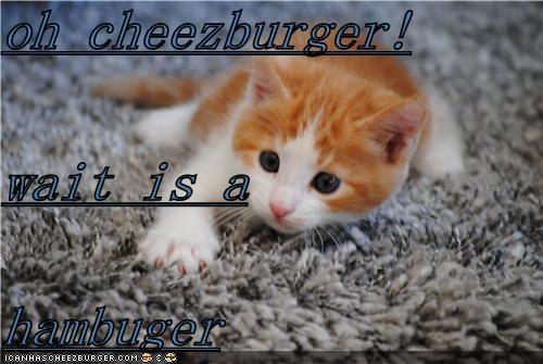 Cheezburger Image 5033189888