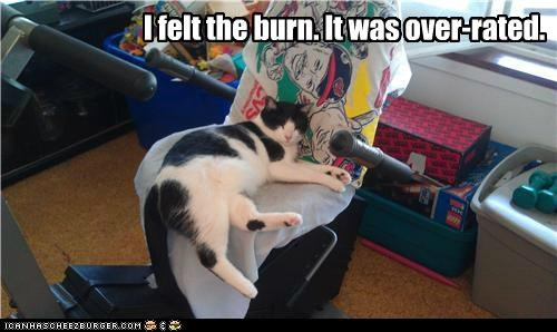 burn caption captioned cat excuse felt lazy overrated sleeping - 5033749504