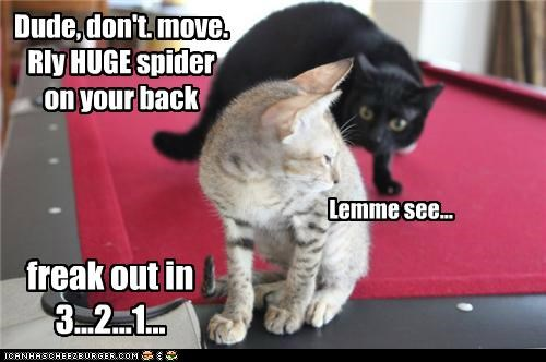 Dude, don't. move. Rly HUGE spider on your back Lemme see... freak out in 3...2...1...