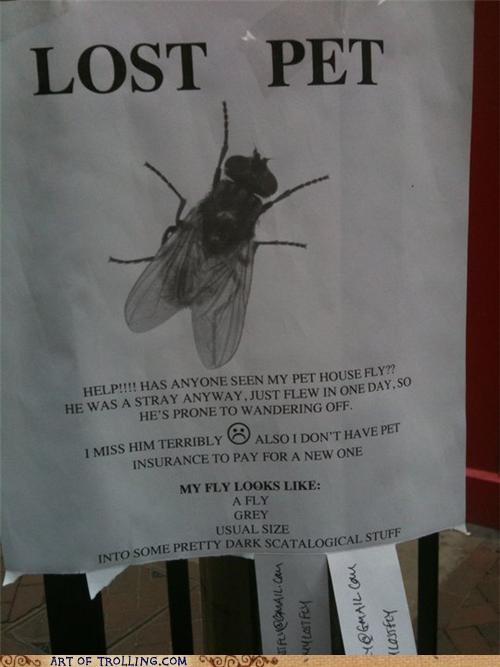 fly IRL lost pet - 5034150656