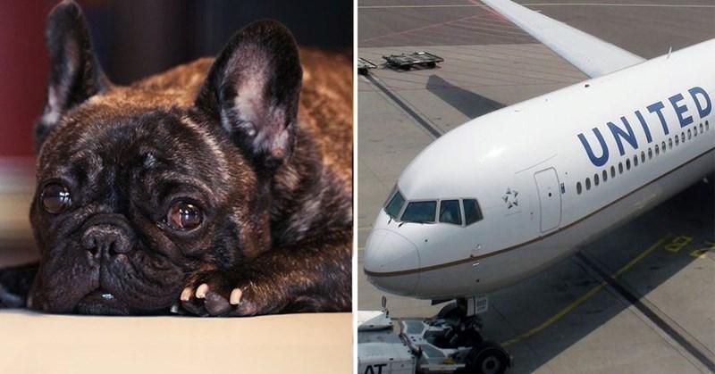 united airlines puppy dies