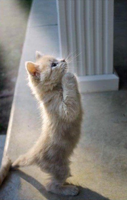 animals praying cute funny - 5035013