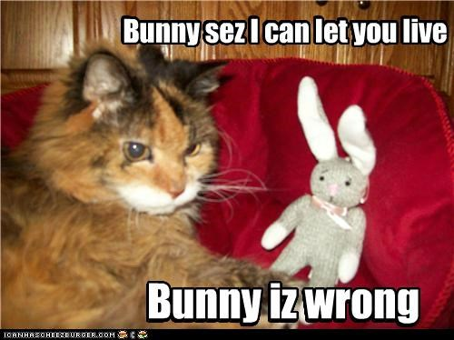 bunny,caption,captioned,cat,let,live,stuffed animal,wrong,you