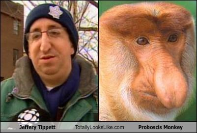 animals,big nose,criminals,Jeffrey Tippett,monkey,nose,Proboscis Monkey,ugly nose