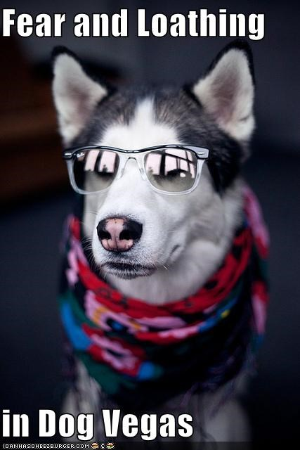 dog vegas,fashion,fear and loathing,husky,las vegas,looking good,scarf,style,sunglasses
