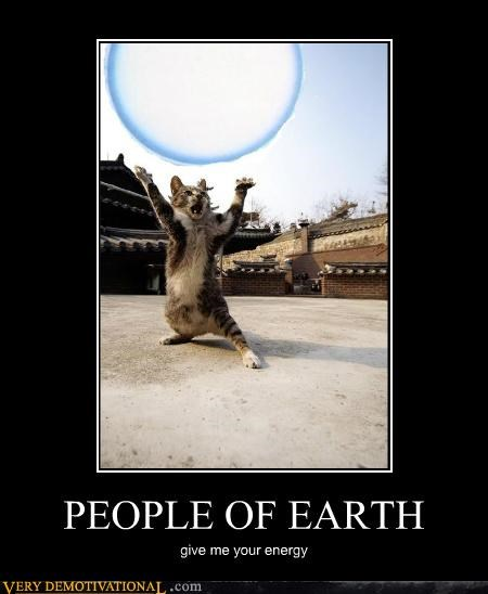 cat,dragonball,hilarious,spirit bomb