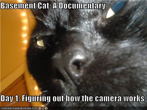 basement cat,camera,caption,captioned,cat,closeup,day,documentary,figuring,how,one,out,works