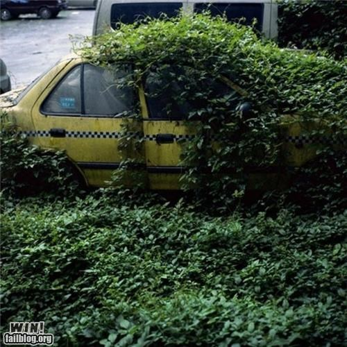 growth,nature,nature will find a way,photography,taxi,urban,urban decy